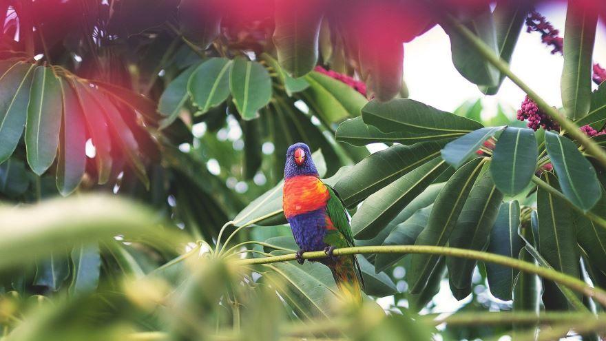 Смотреть красивые фото попугаи дома