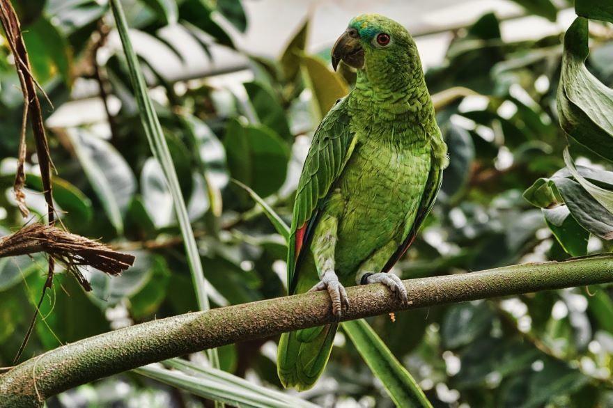 Скачать бесплатно лучшее фото попугая крупным планом