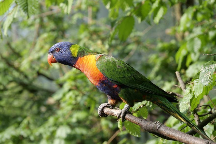 Смотреть интересное фото двух попугаев