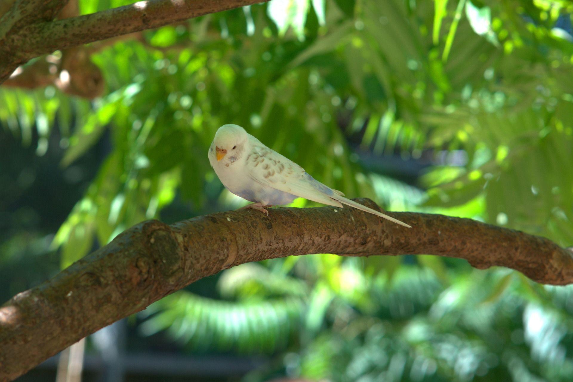 Скачать онлайн бесплатно фото лучшего волнистого попугая