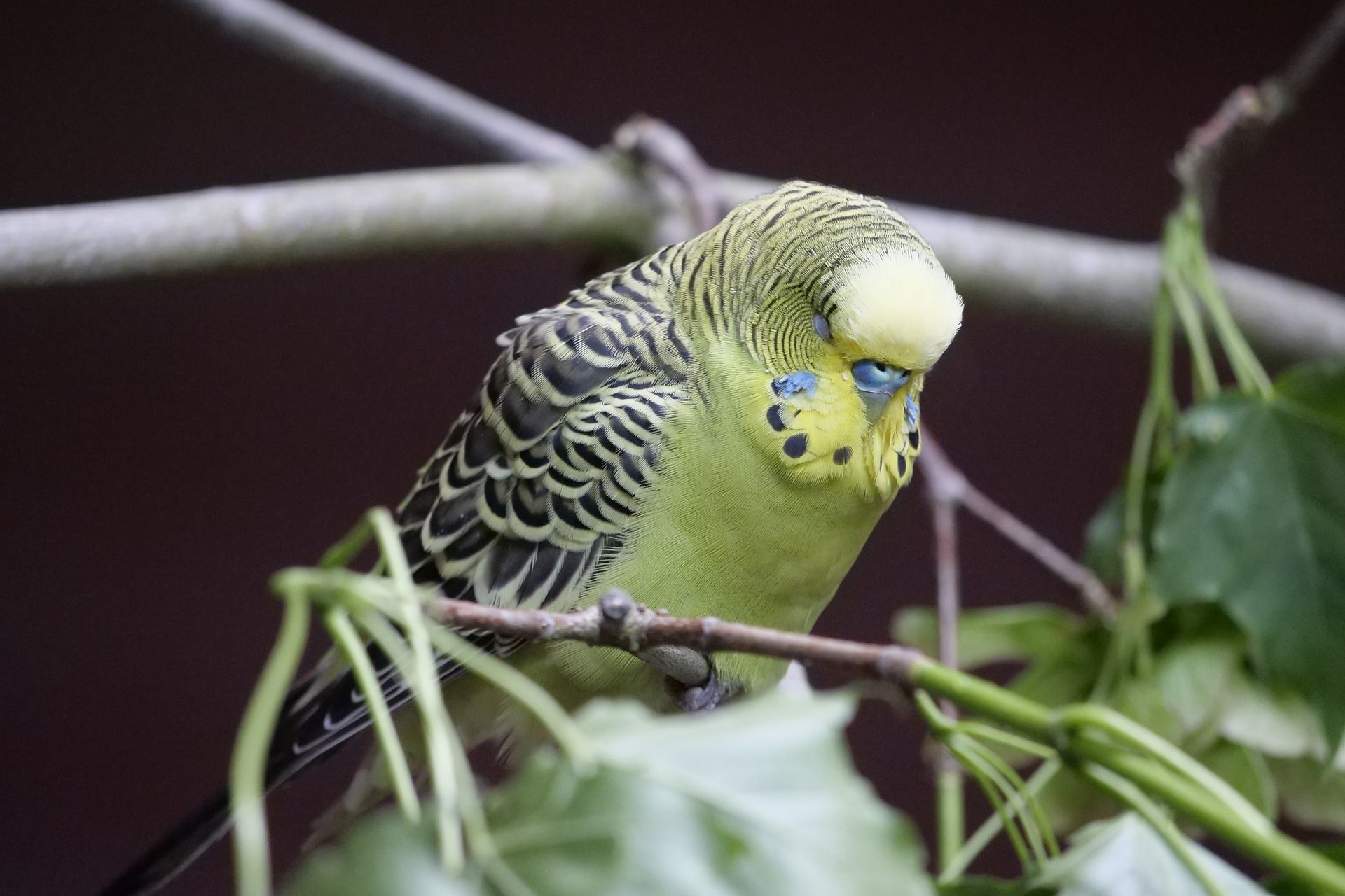 Смотреть интересное фото трех попугаев