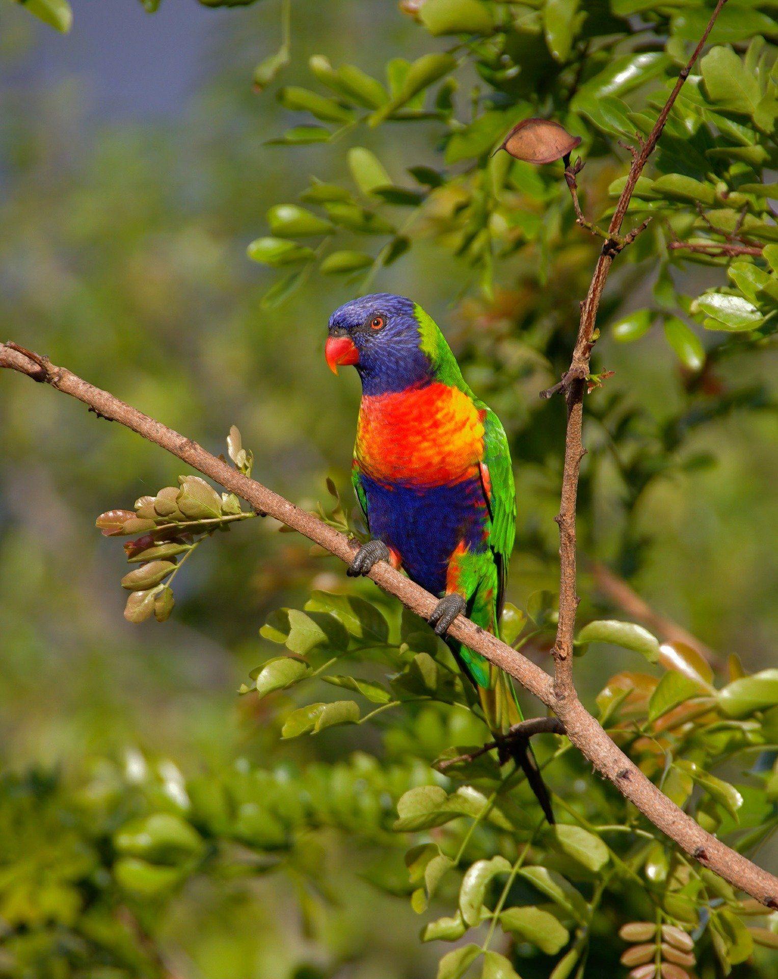 Смотреть красивое фото ручного, домашнего попугая