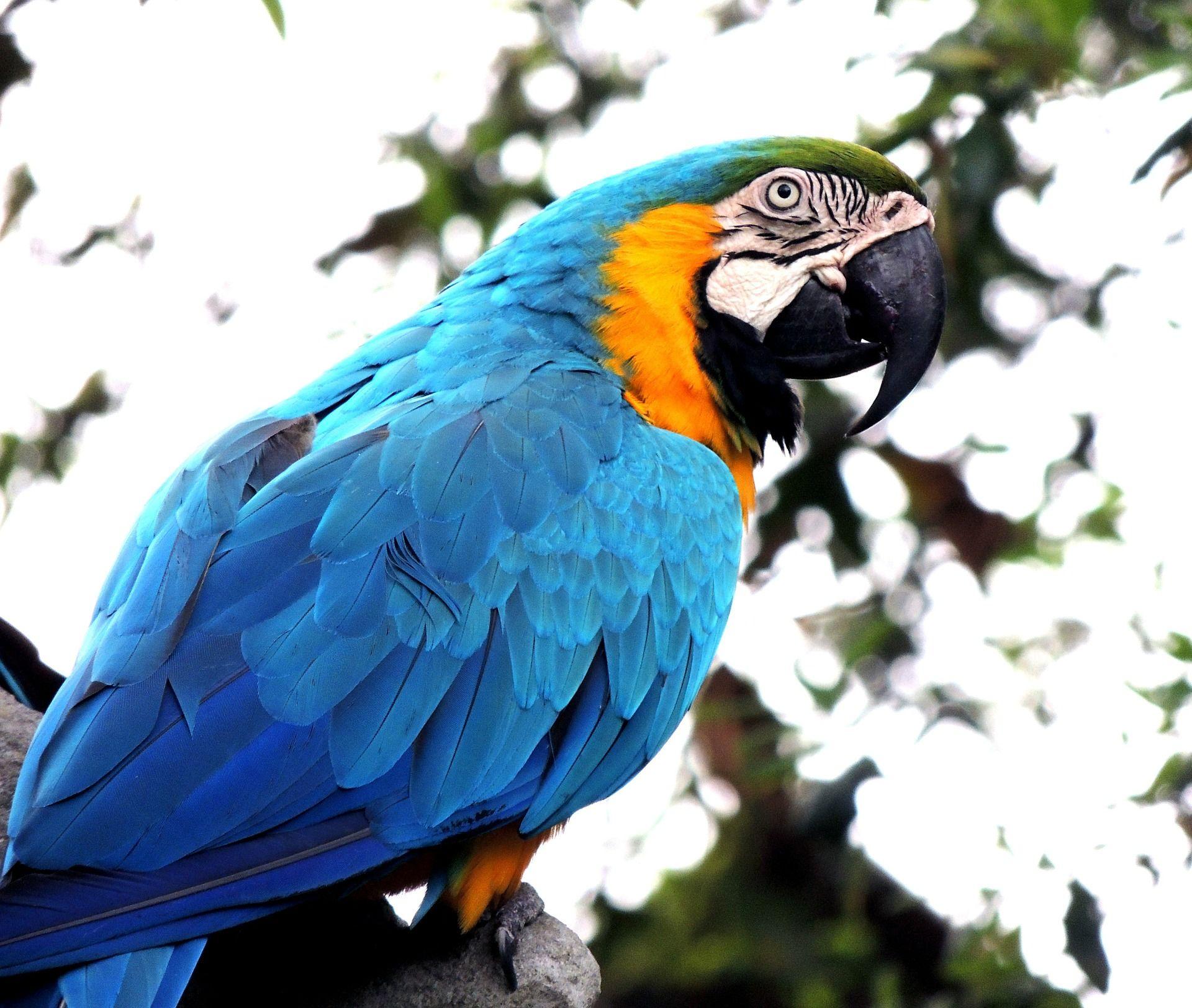 Скачать бесплатно фото красивых синих попугаев на природе
