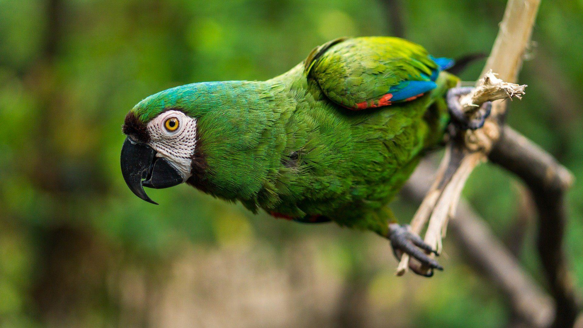 Смотреть красивое фото двух попугаев бесплатно