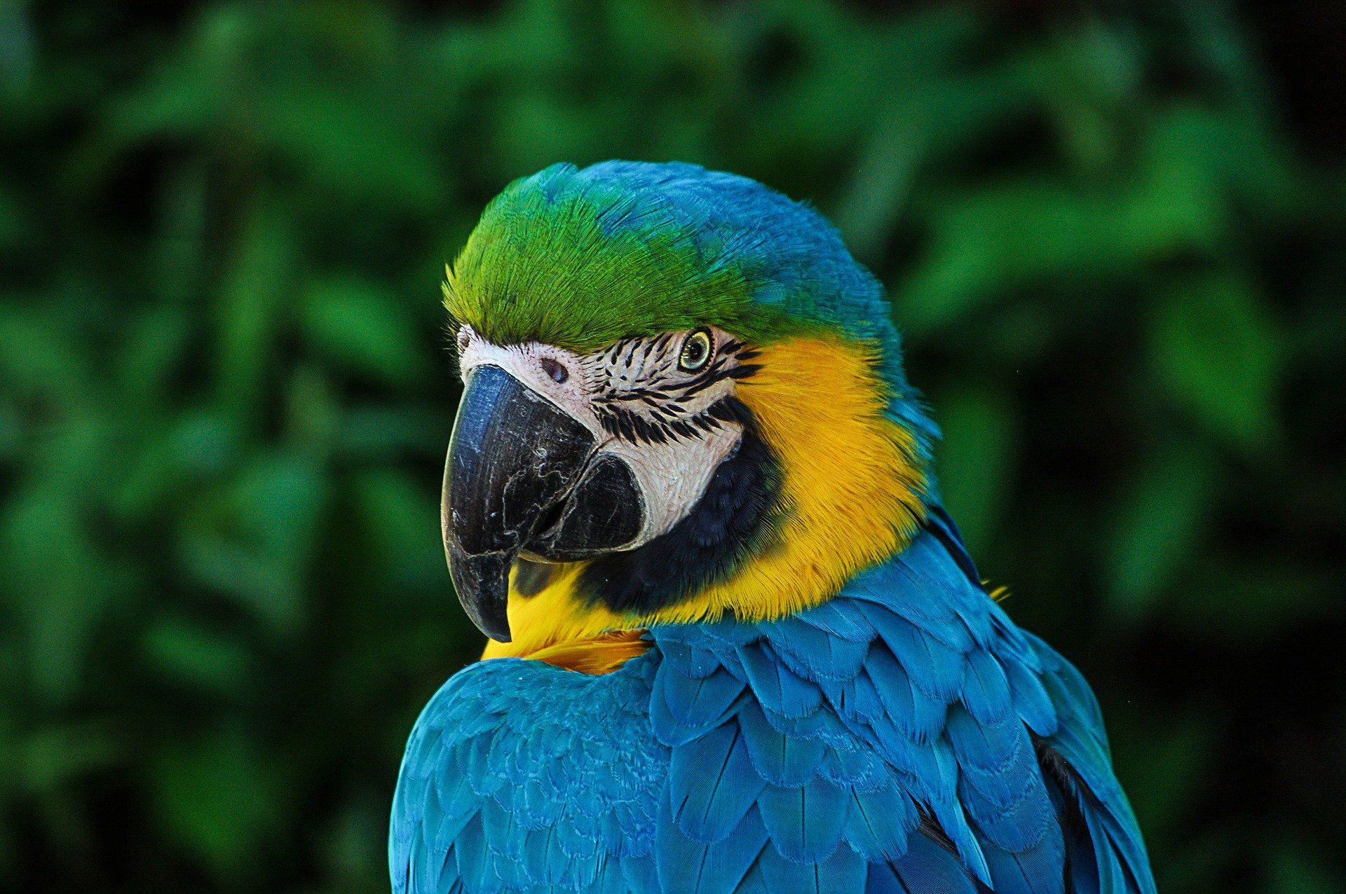 Смотреть фото красивого, волнистого, зеленого попугая крупным планом