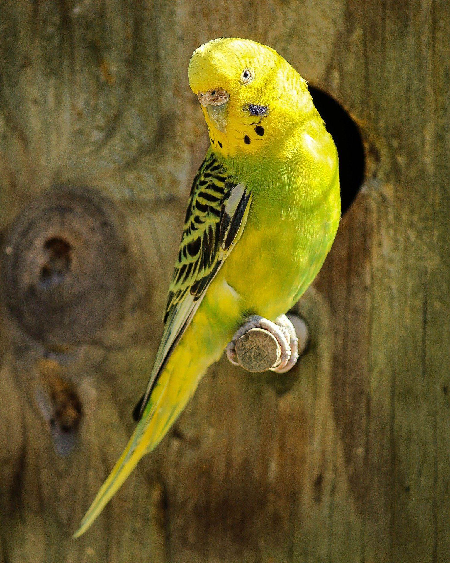 Лучшая картинка попугая на природе