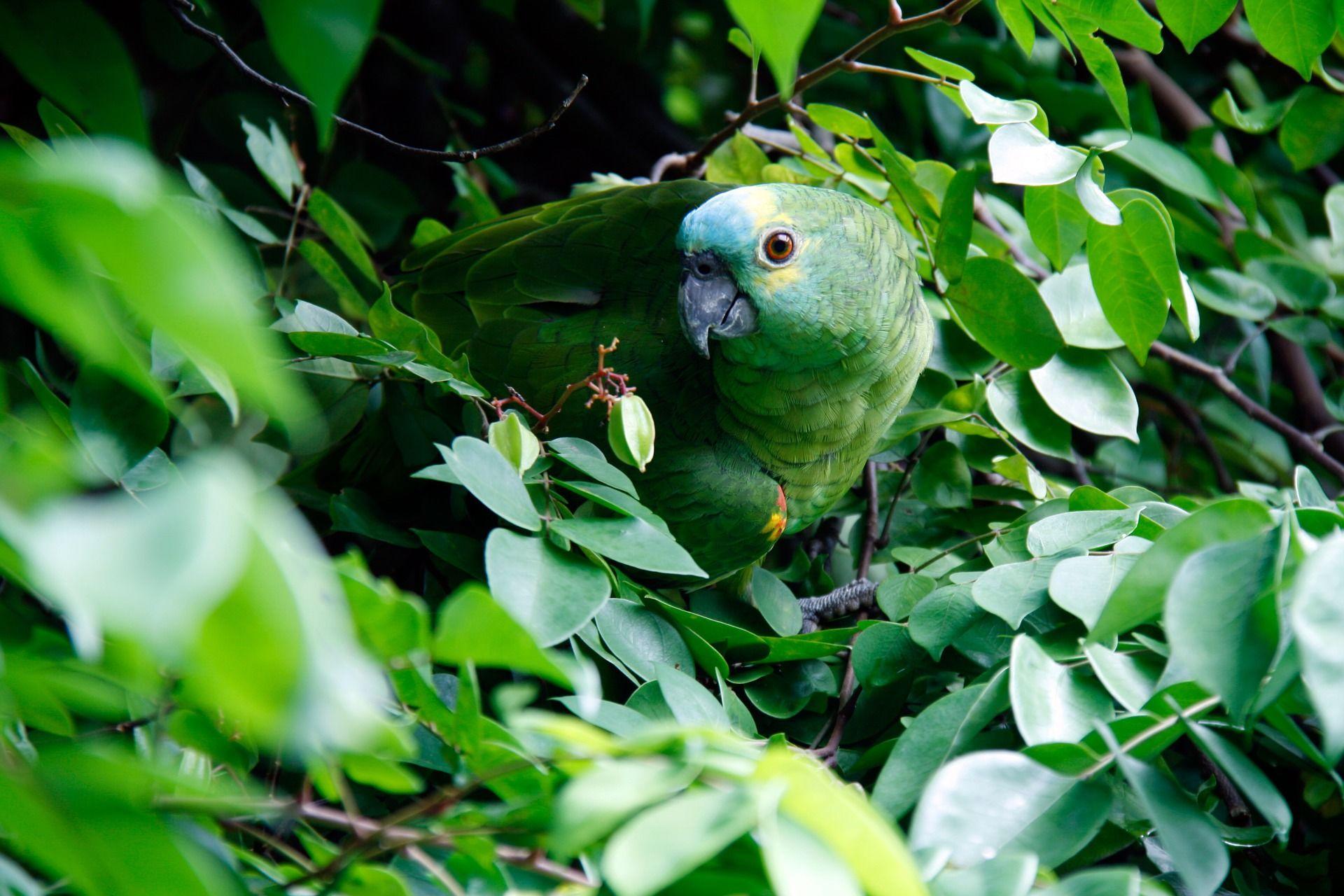 Скачать бесплатно красивое фото зеленого попугая крупным планом
