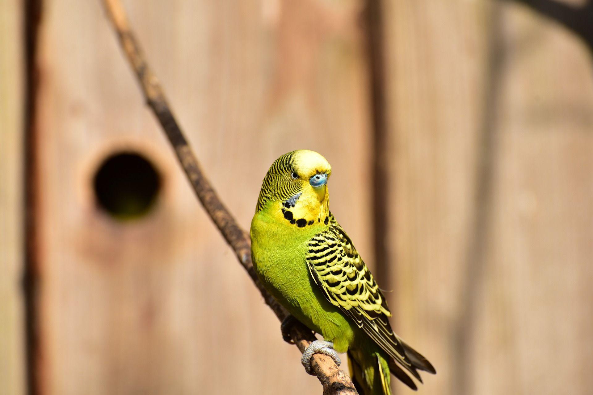 Картинка красивого, зеленого попугая в клетке
