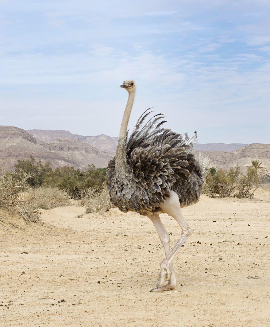 Скачать интересное фото страуса на природе летом