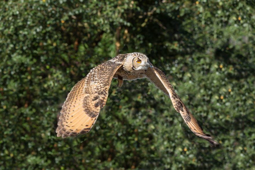 Смотреть интересную картинку совы на пеньке