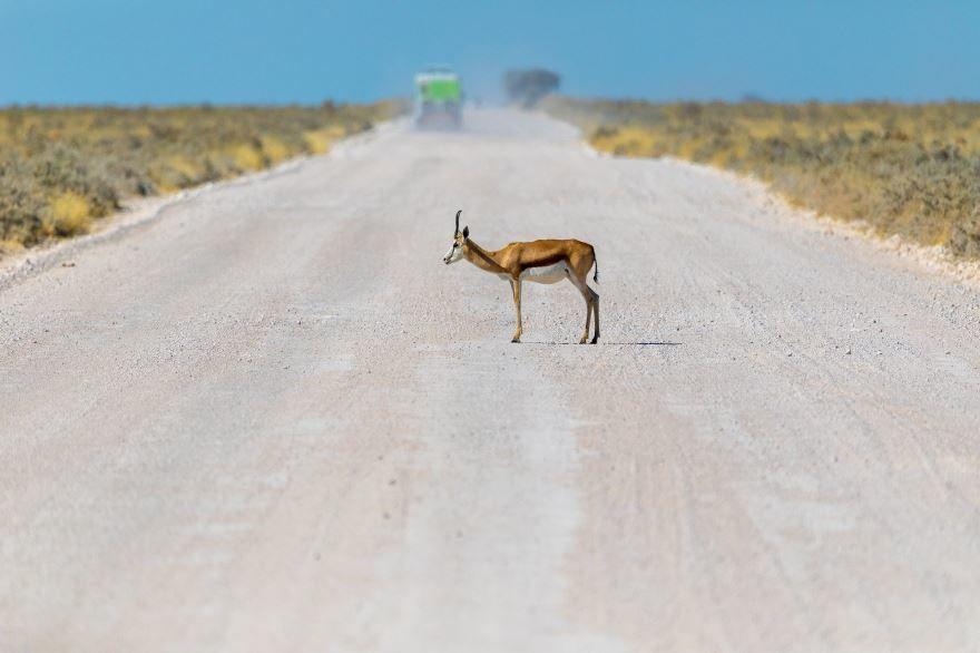 Фото африканской антилопы, скачать