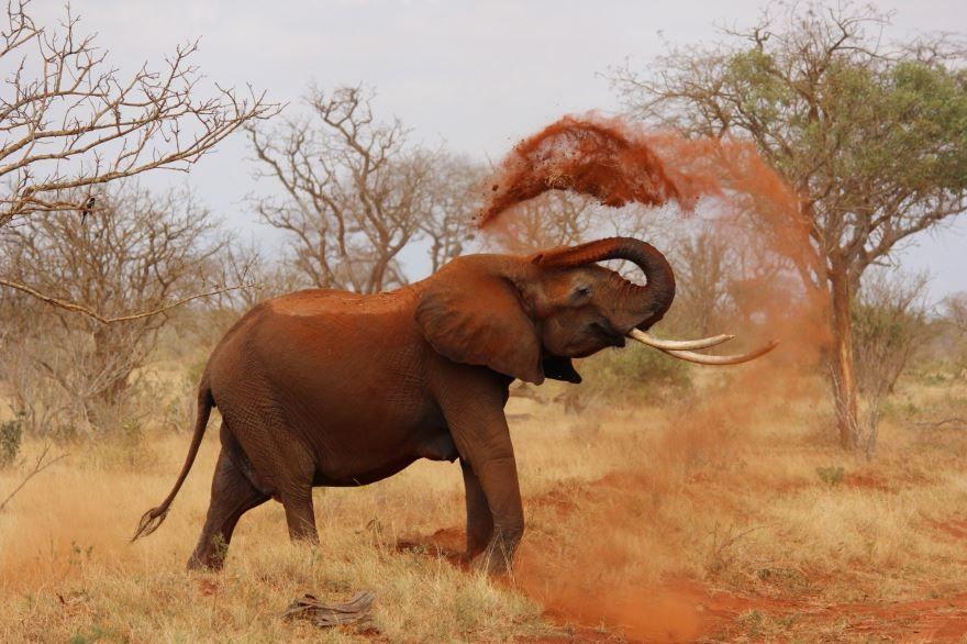 Смотреть лучшее фото слониха со своим детенышем