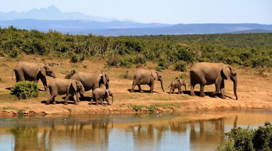 Смотреть оригинальное фото слон на природе кушает