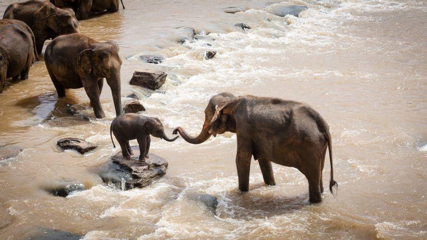 Скачать бесплатно красивую картинку слониха со слоненком на водопое