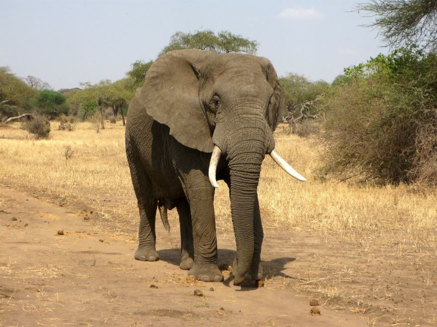 Интересное фото слона на природе