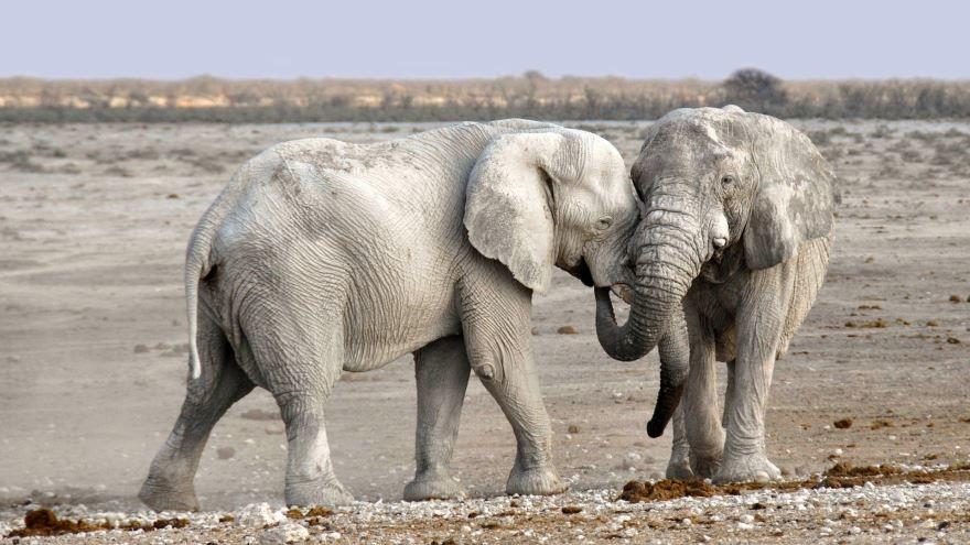 Оригинальное фото слон гуляет на природе