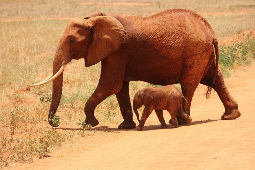 Смотреть лучшее фото семья слонов в природных условиях