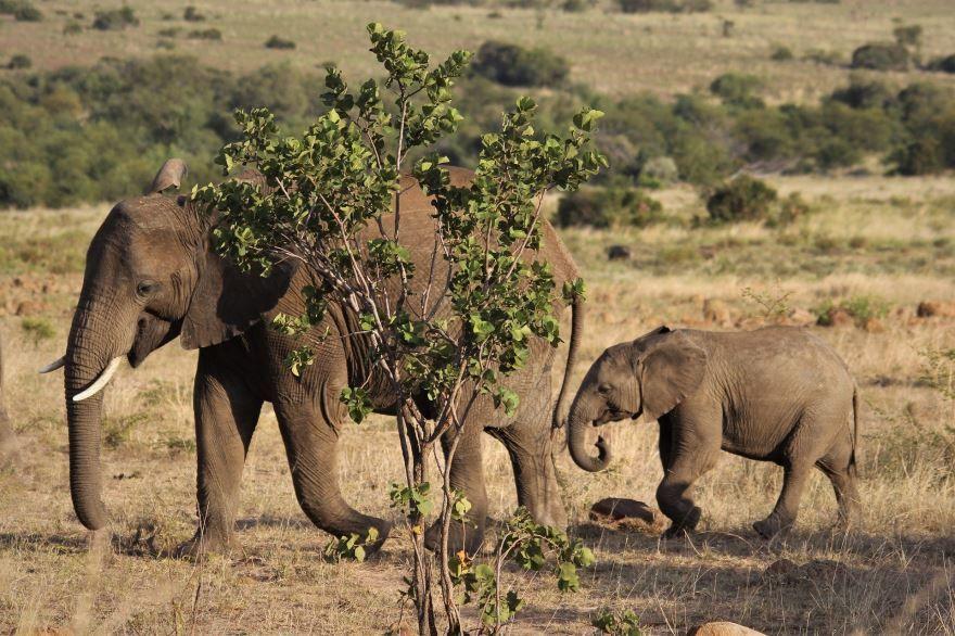 Смотреть интересную картинку маленького слоника