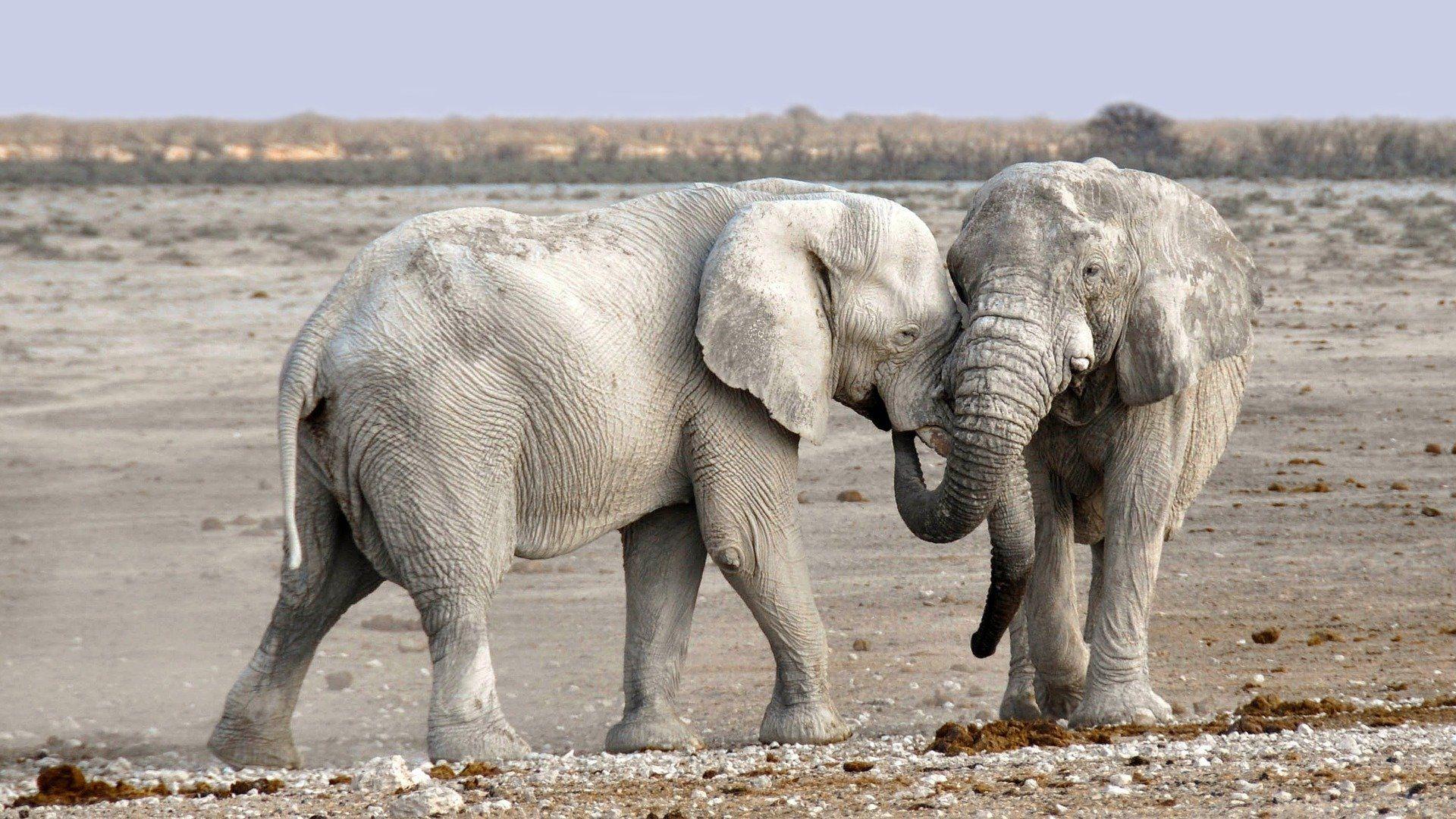 Смотреть лучшее фото белого слона бесплатно