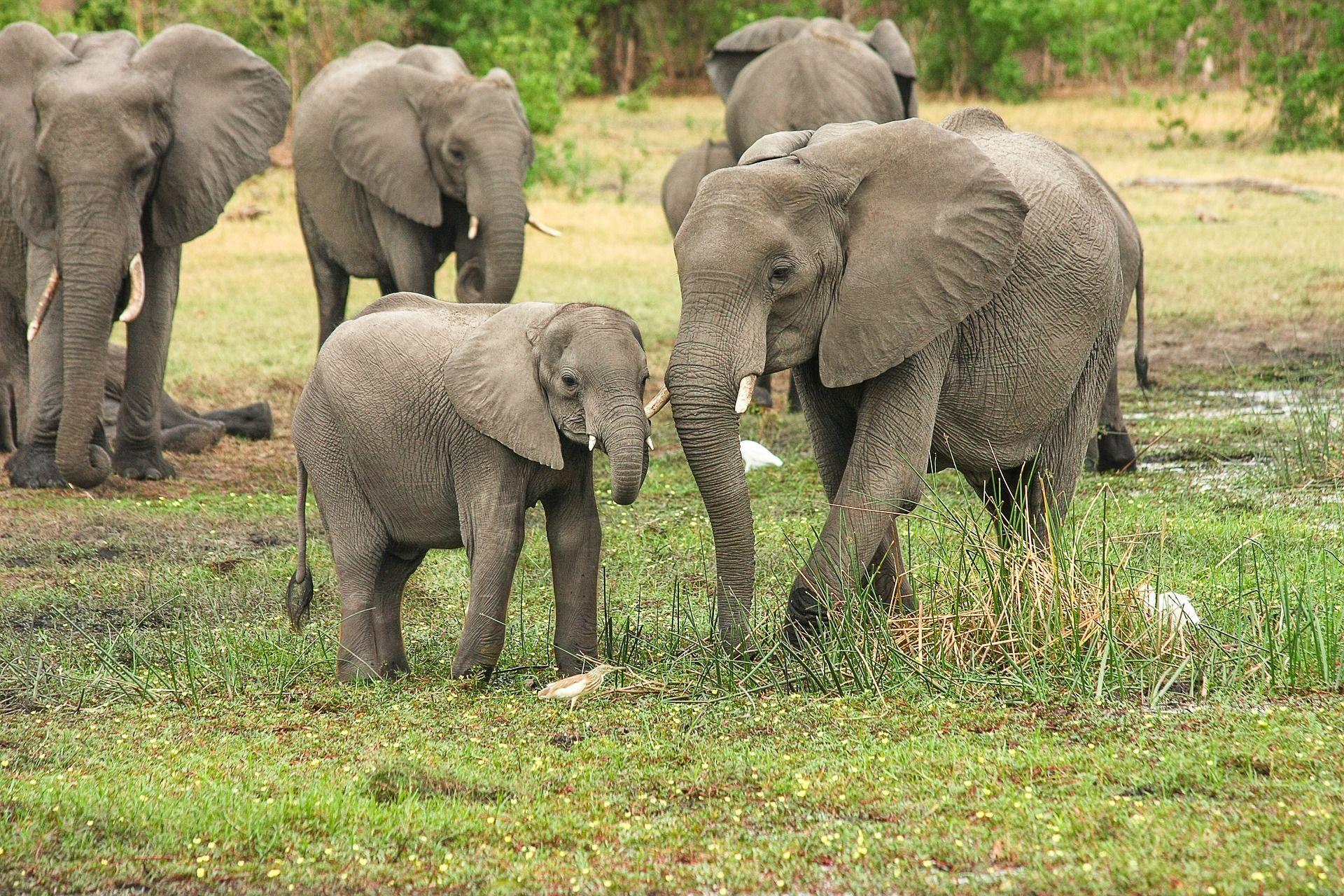 Скачать онлайн бесплатно оригинальное фото белого слона на природе