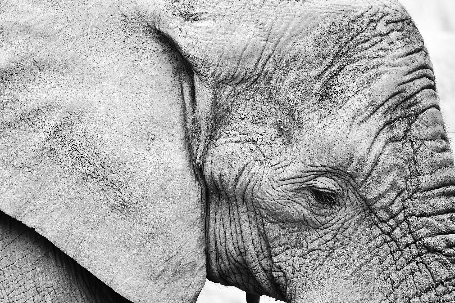 Смотреть интересную картинку маленького белого слоненка