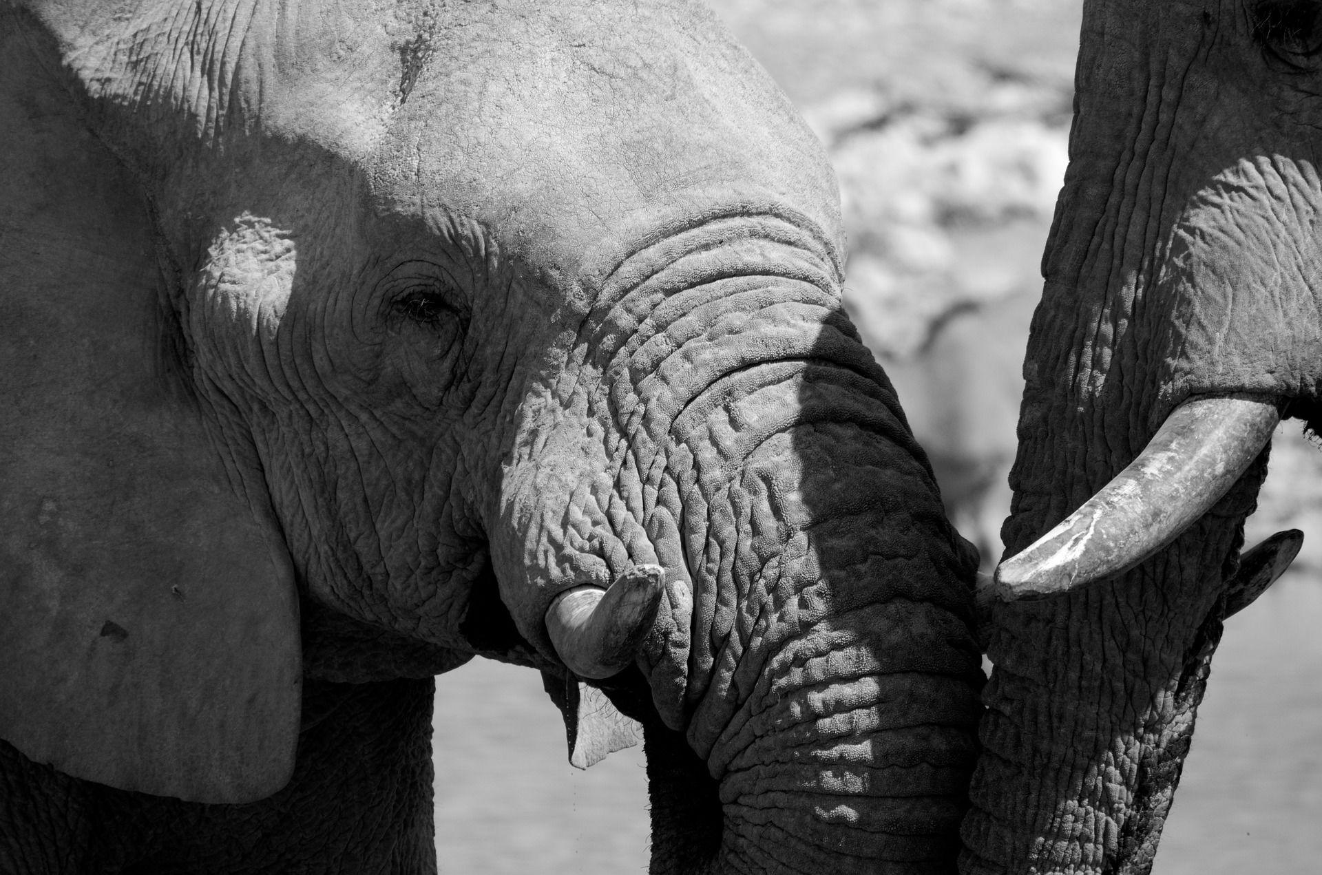 Скачать красивую картинку белого слона в хорошем качестве