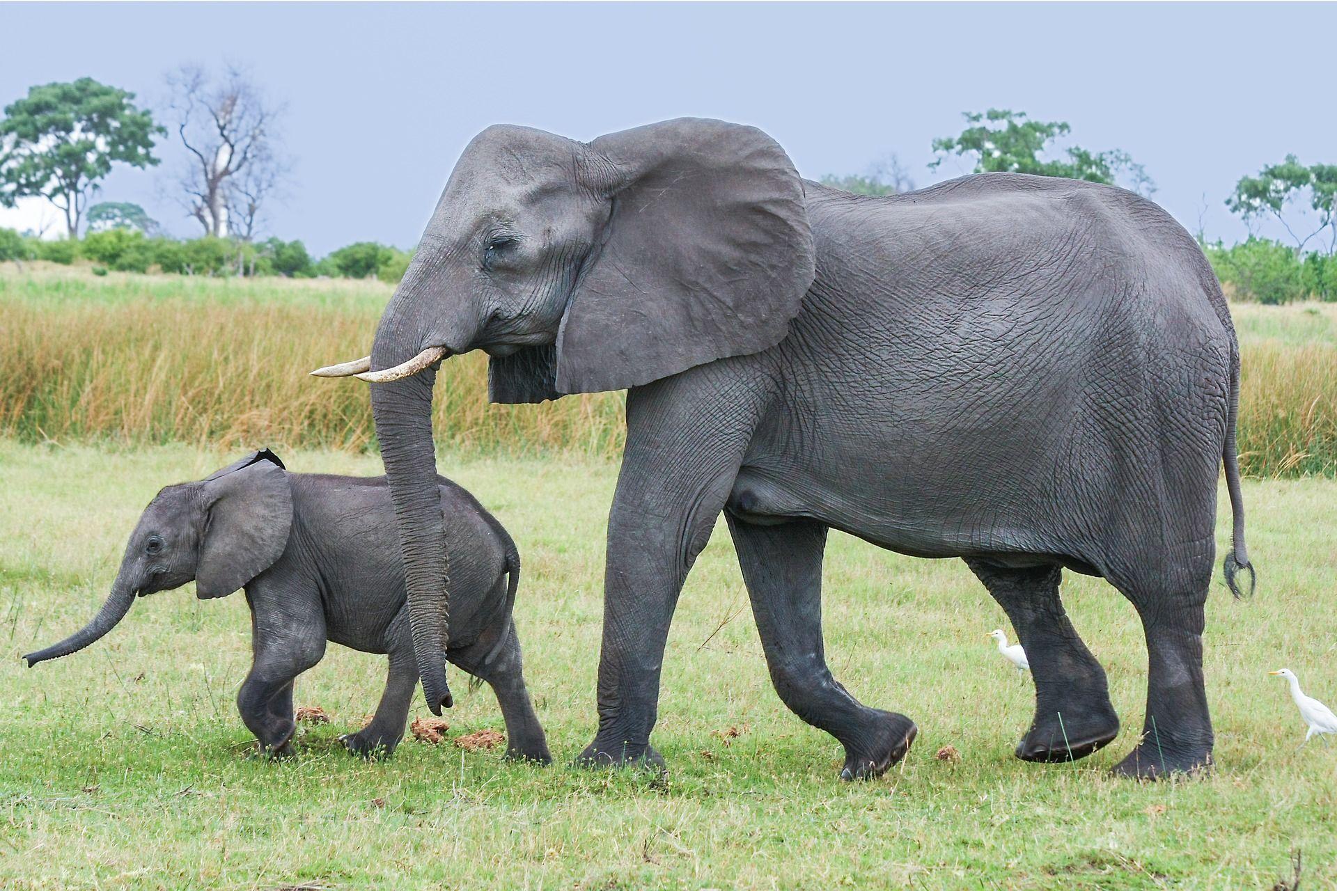 Смотреть интересную картинку белого слона на природе