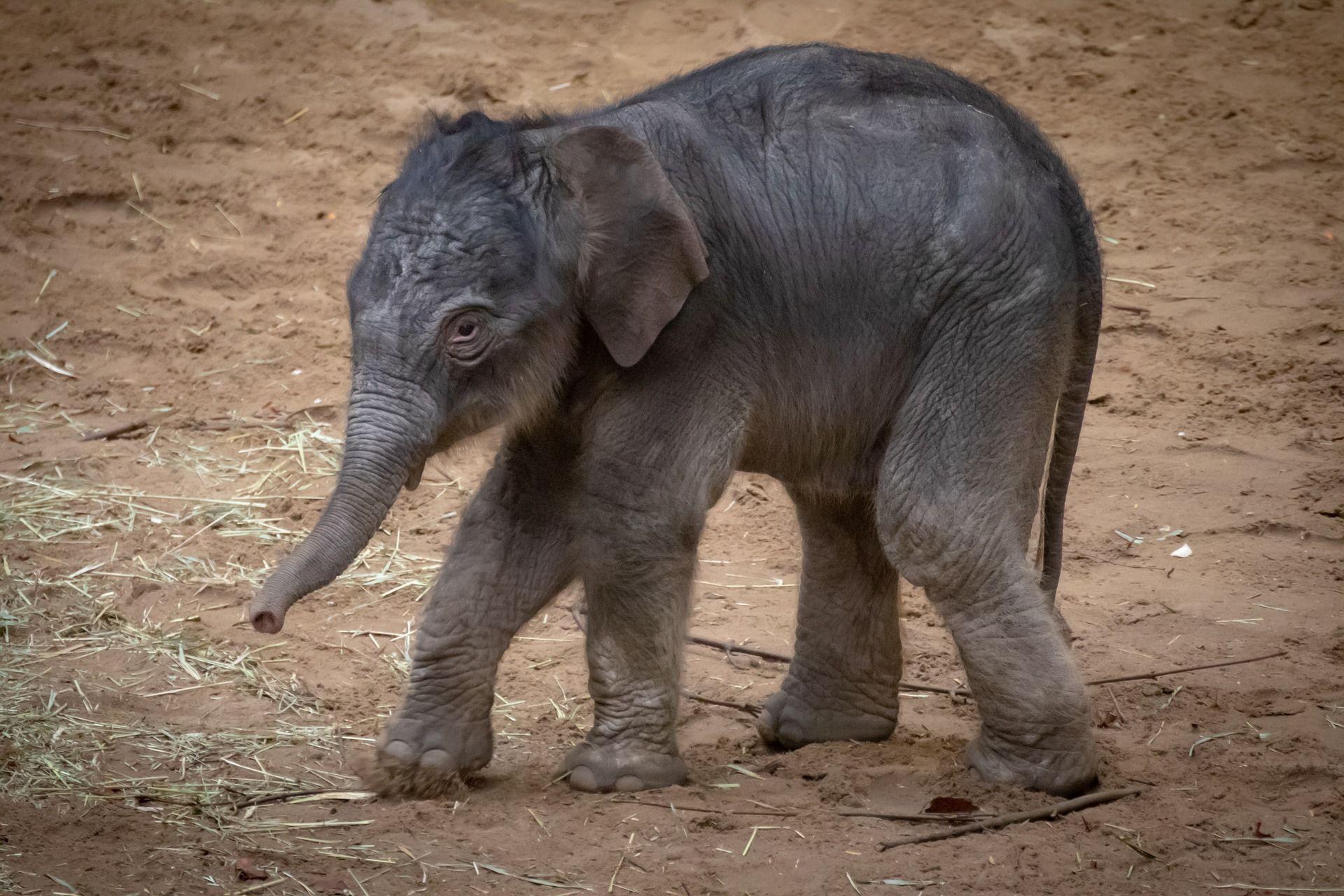 Скачать бесплатно красивое фото белого слона и маленького слоненка на природе