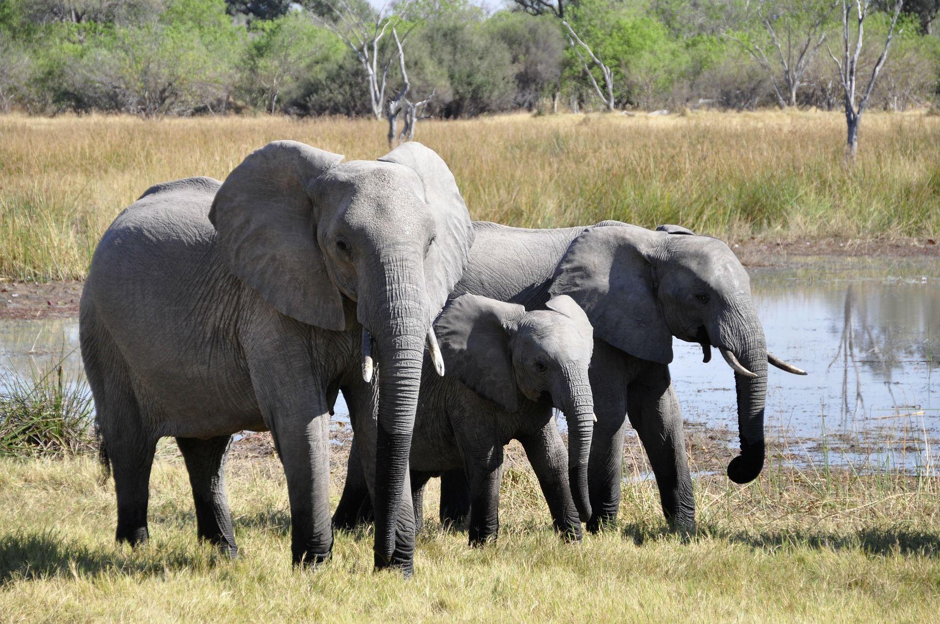 Скачать онлайн бесплатно лучшее фото белого слона