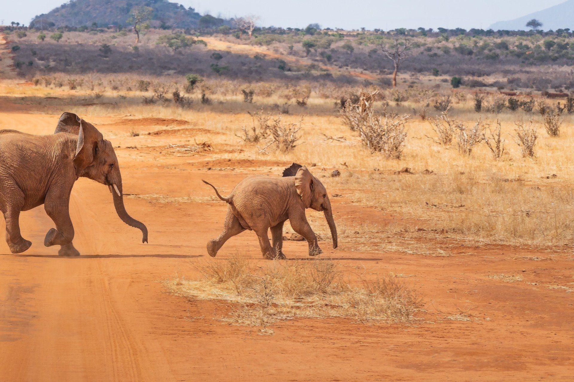 Красивое фото трех белых слонов на водопое