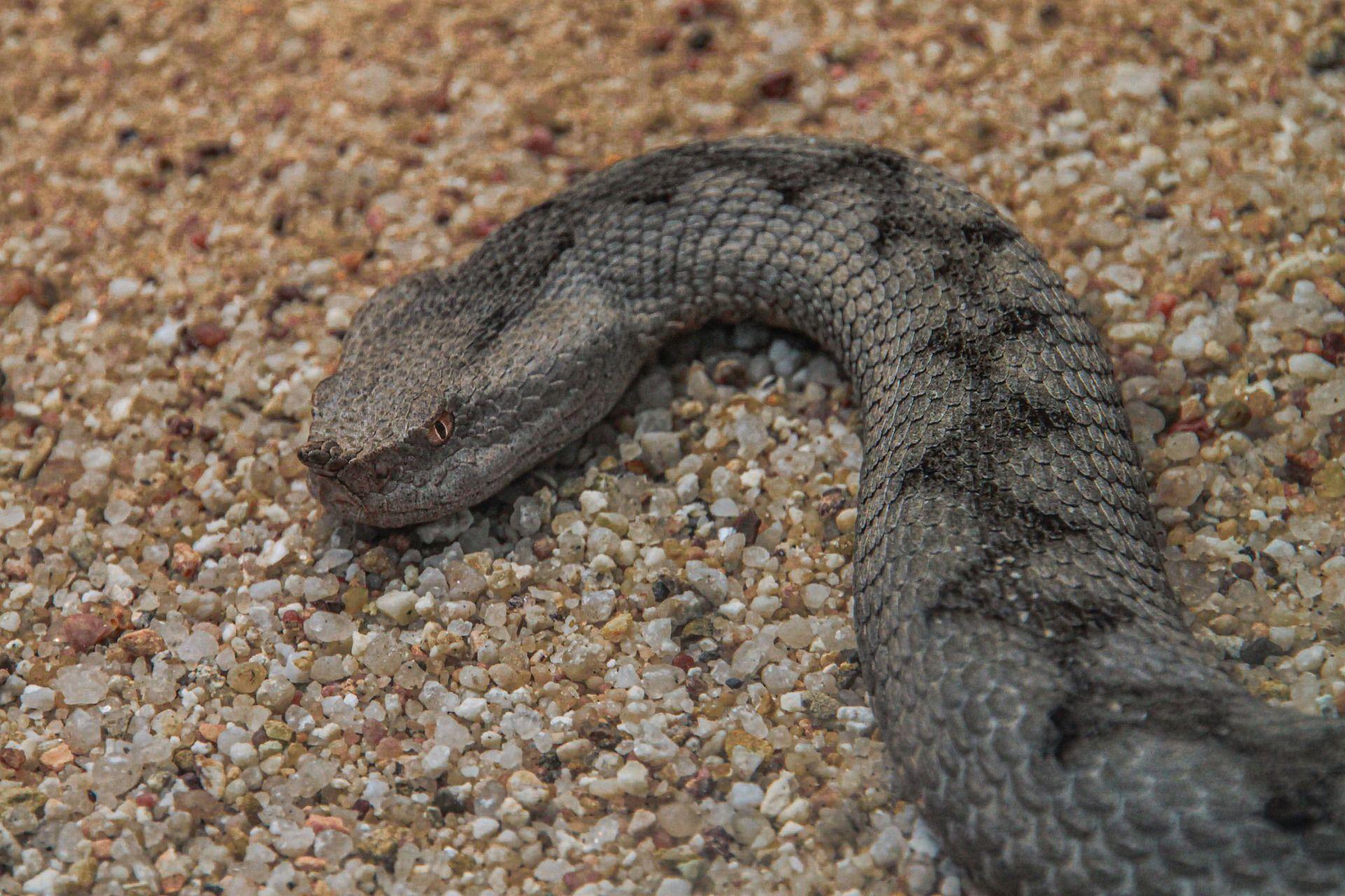 Лучшие фото змеи гадюки