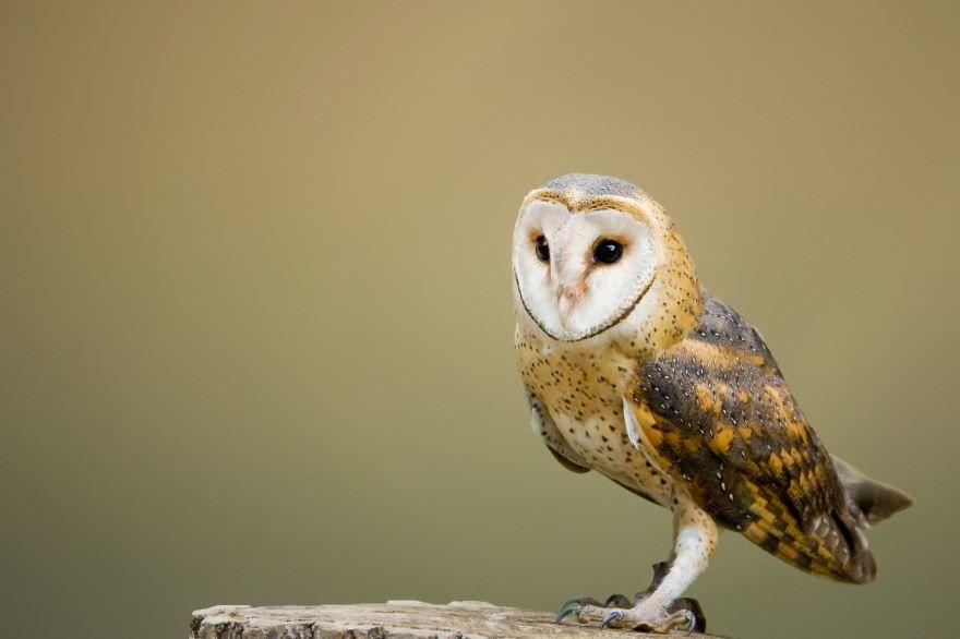 Смотреть красивую картинку совы необычного окраса