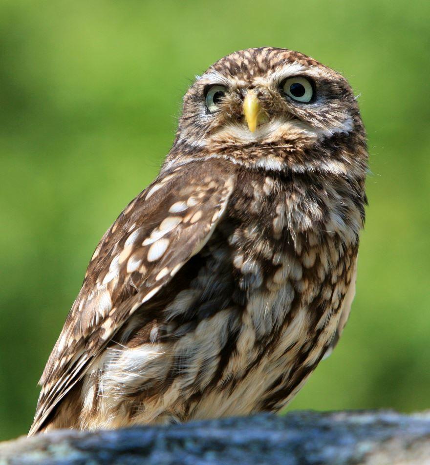 Смотреть интересное фото совы на природе
