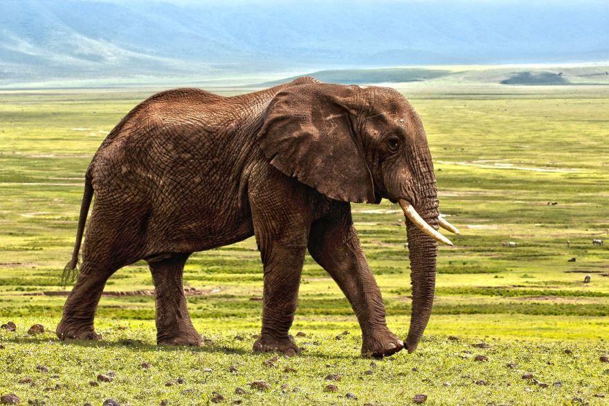Смотреть интересную картинку слониха и маленький слоненок
