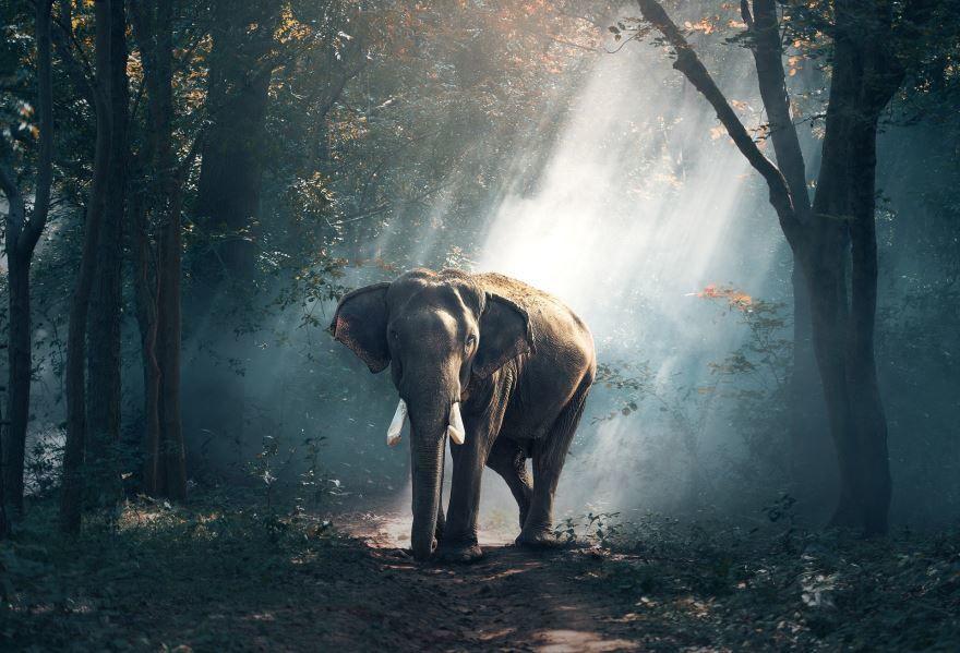Скачать необычную картинку слона в дикой природе