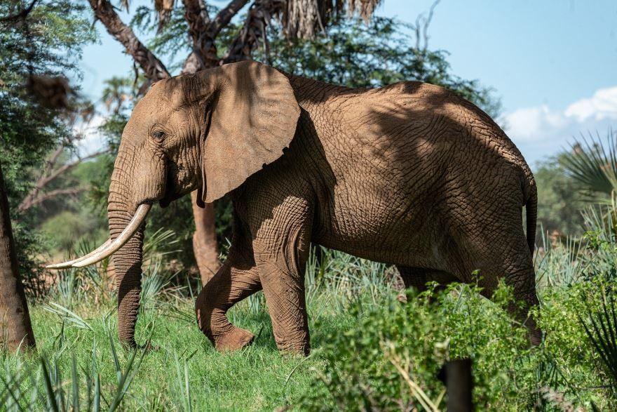 Скачать бесплатно фото большого слона на природе