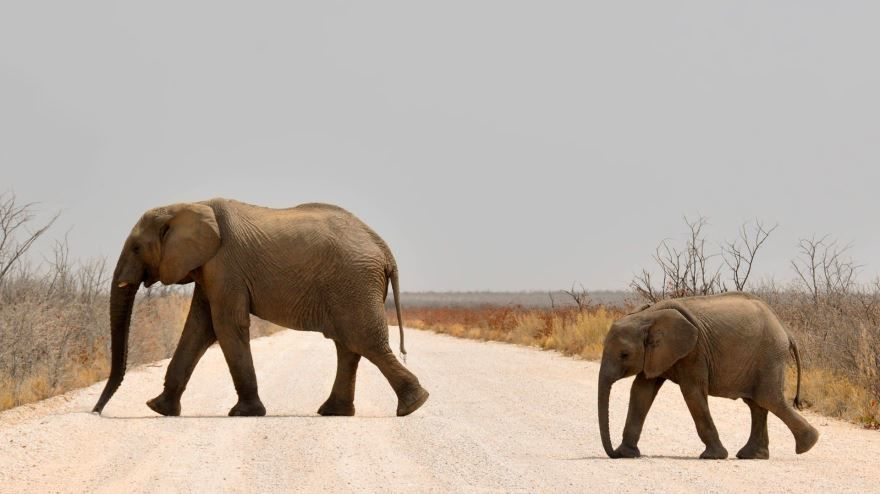 Смотреть лучшее фото слонов на водопое