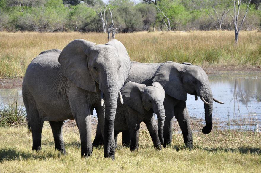 Смотреть бесплатно картинку семья слонов на природе