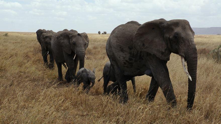 Скачать бесплатно необычную картинку маленького белого слоненка