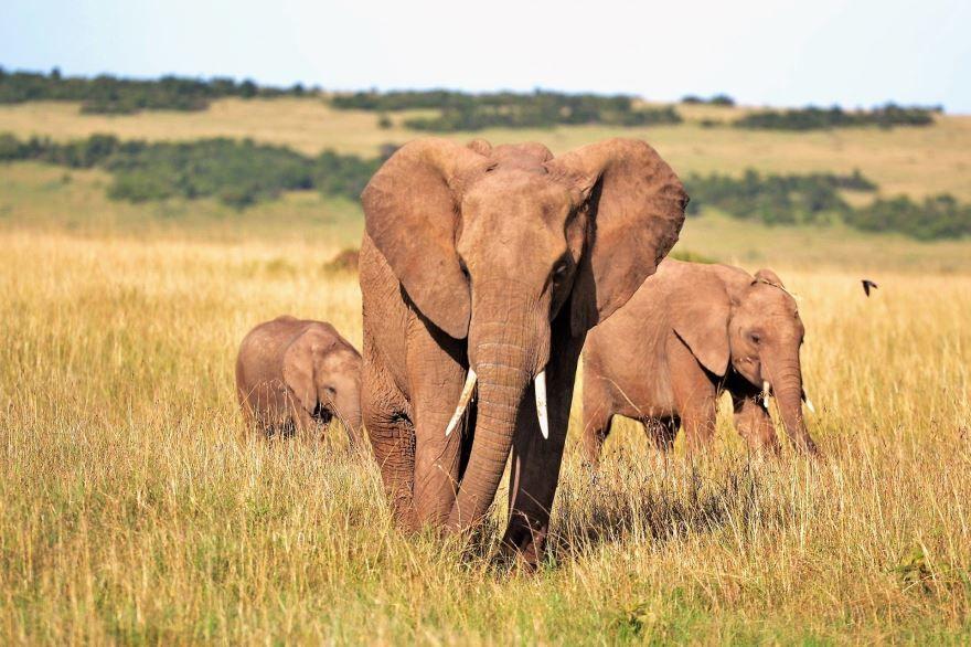 Скачать красивое фото белого слона в хорошем качестве
