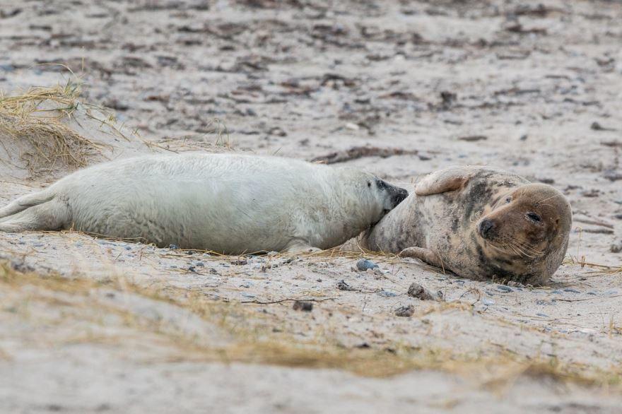 Скачать бесплатно фото тюленя на природе