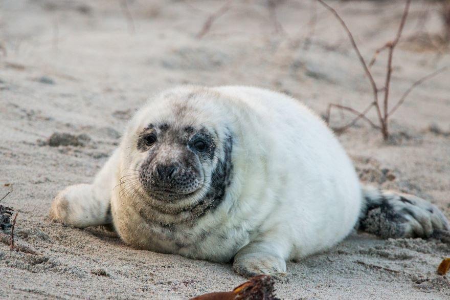 Смотреть онлайн бесплатно красивые картинки тюленя в море