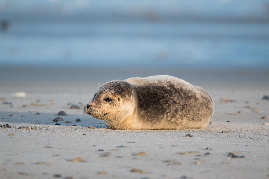 Скачать бесплатно лучшее фото тюленя в хорошем качестве