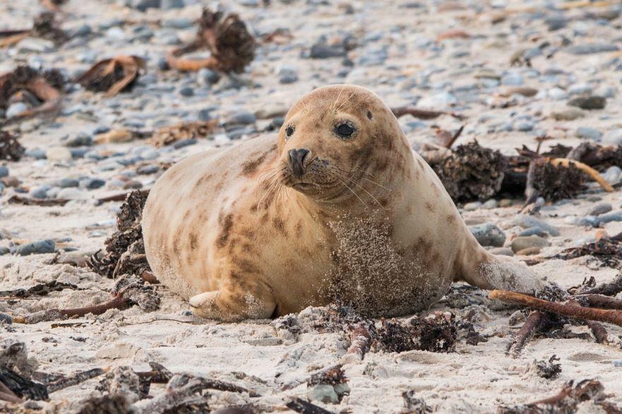 Смотреть бесплатно интересную картинку про тюленя на природе
