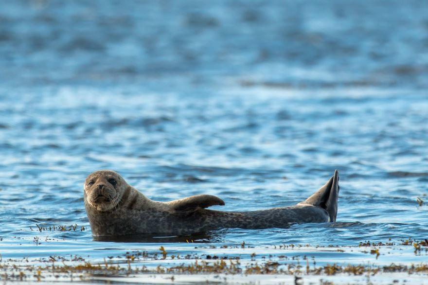 Скачать необычную картинку тюленя в дикой природе