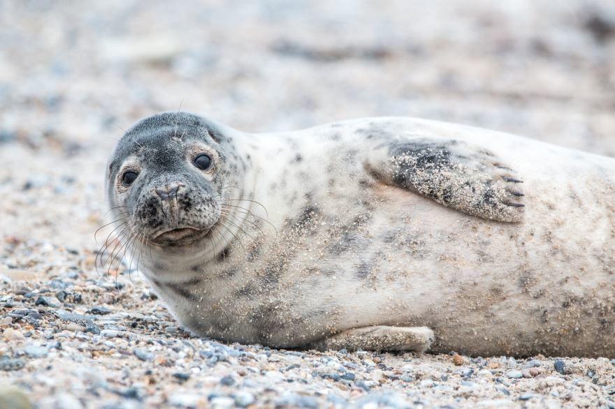 Скачать бесплатно необычную картинку маленького тюленя