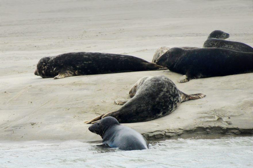 Смотреть бесплатно лучшую картинку тюленя на льдине