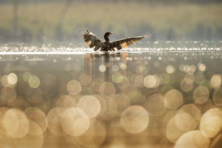 Скачать бесплатно интересную картинку утки
