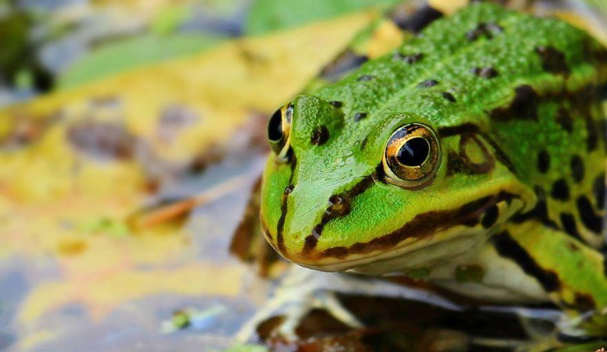 Смотреть смешные картинки с жабой