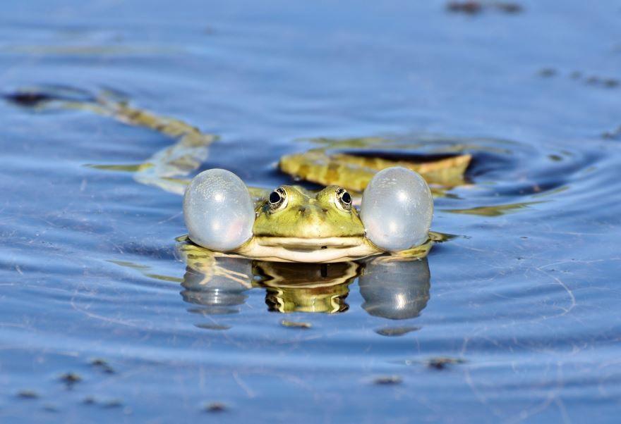 Прикольные фото жабы